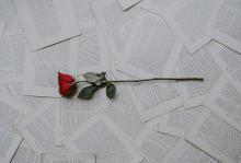 single rose lying on pages torn from a book